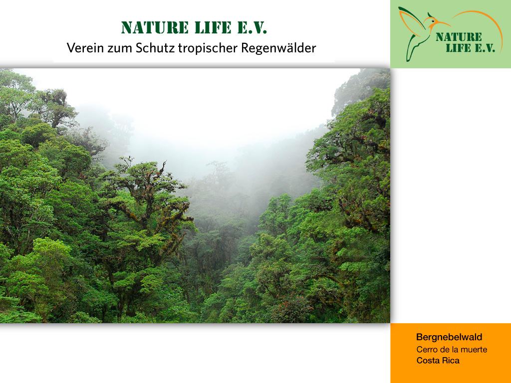 Bergnebelwald (Cerro de la muerte, Costa Rica) 1024 x 768