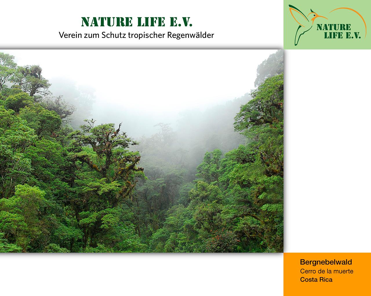 Bergnebelwald (Cerro de la muerte, Costa Rica) 1280 x 1024