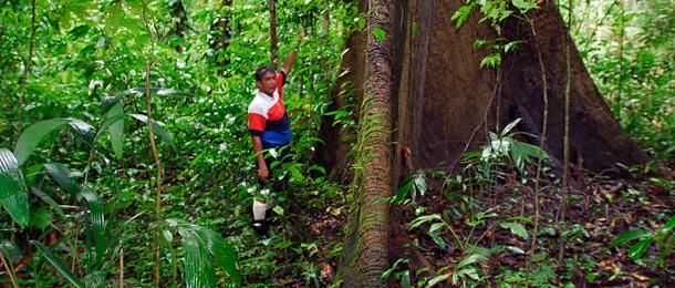 Einheimische helfen Regenwald schützen