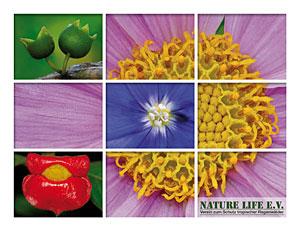 Postkarte Motiv 9